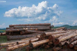 俄罗斯联邦林业署预测今年存在森林火灾隐患的地区