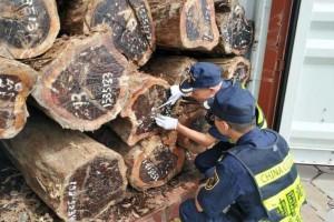 嘉兴海关截获一批进口原木 发现大量活体有害生物