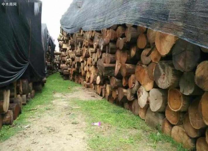 缅甸男子非法运输木材切割料,逃逸时撞上林业局车辆