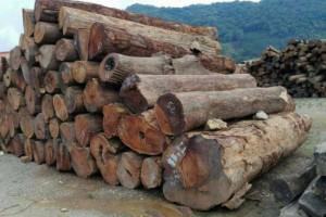 优质非洲黄花梨木原木批发