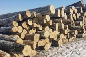 林场直供进口桦木原木,乌克兰樟子松原木大量供应