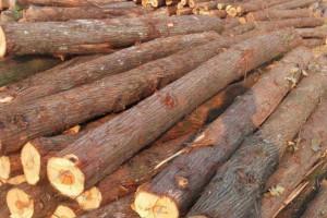 本地优质的红心香柏木原木大量供应