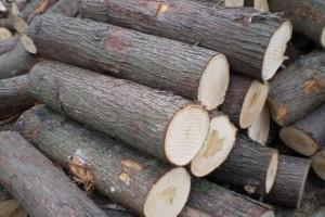 供应柏木原木浴桶料
