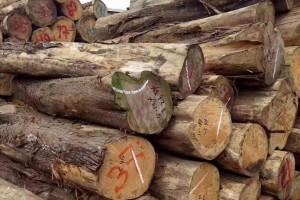 优质柏木原木出售价格