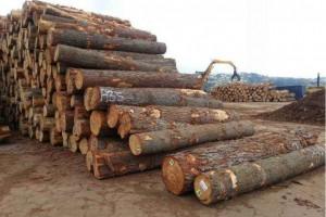 中国木材加工和进口在俄罗斯的当下处境如何