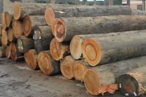 红柳桉木原木批发