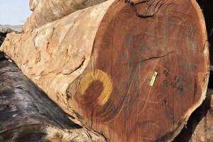 苏州翔福木业条纹乌木,菠萝格,红柳桉原木高清图片