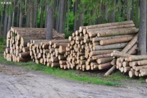 国家林科院木材所牵头制定产业精准扶贫标准,助推脱贫攻坚