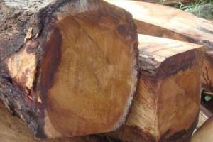 张家港市金港镇港区润庆隆木材非洲进口原木高清图片