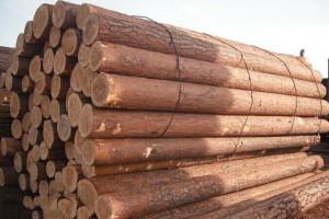 供应俄罗斯樟子松原木