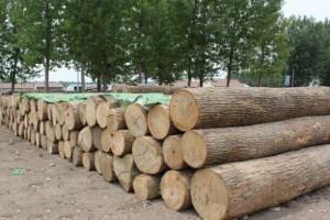 供应水曲柳原木