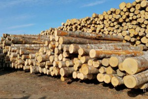 新冠肺炎疫情下,俄罗斯木材出口商被迫改变战略并寻找新的市场