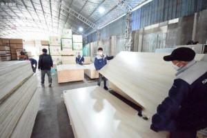 安徽省宿州市顺河乡板材加工企业恢复正常生产