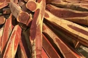 赞比亚血檀原木大方批发价格