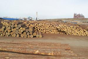 俄罗斯落叶松原木厂家批发价格