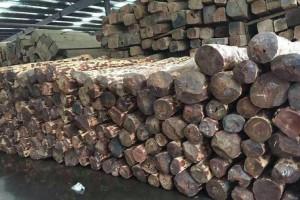 张家港众联红木业进口血檀,亚花梨,阔变豆原木高清图片