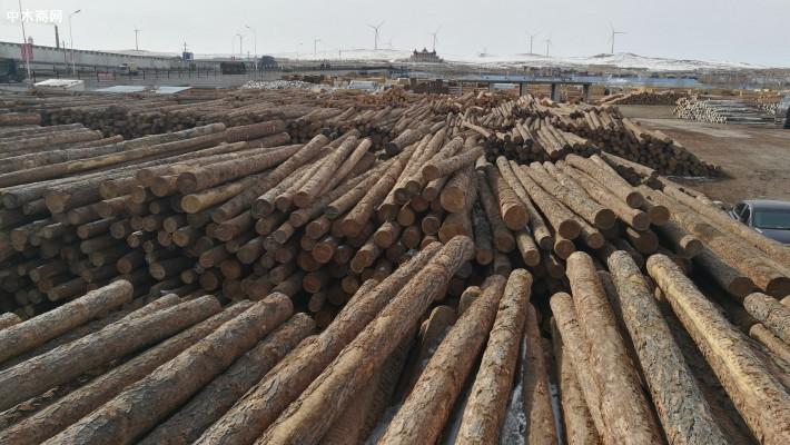 俄罗斯西伯利亚落叶松原木厂家