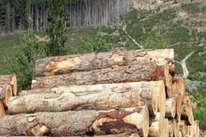 供应红松原木最大厂家格浪,红松是红色的木材吗