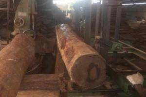 非洲亚花梨原木厂家直供