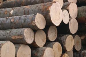全国多地木材市场价格上涨