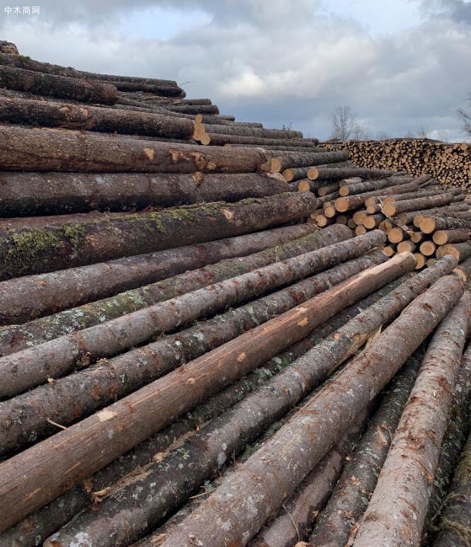 同江俄罗斯白松原木价格多少钱一立方米厂家