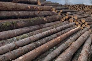 同江俄罗斯白松原木价格多少钱一立方米