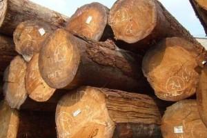 各种规格北美洲铁杉原木长期大量供应