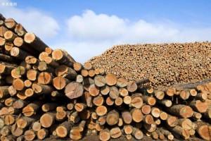 俄罗斯拟升级国家统一木材备案与交易自动化信息系统