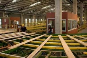 安徽蒙城:自动化木材企业成品产销两旺