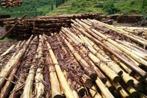 云南文山文志满木材经营部杉木原木,杉木檩条高清图片