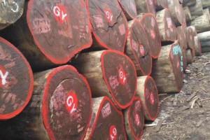 刚果红花梨原木厂家直销
