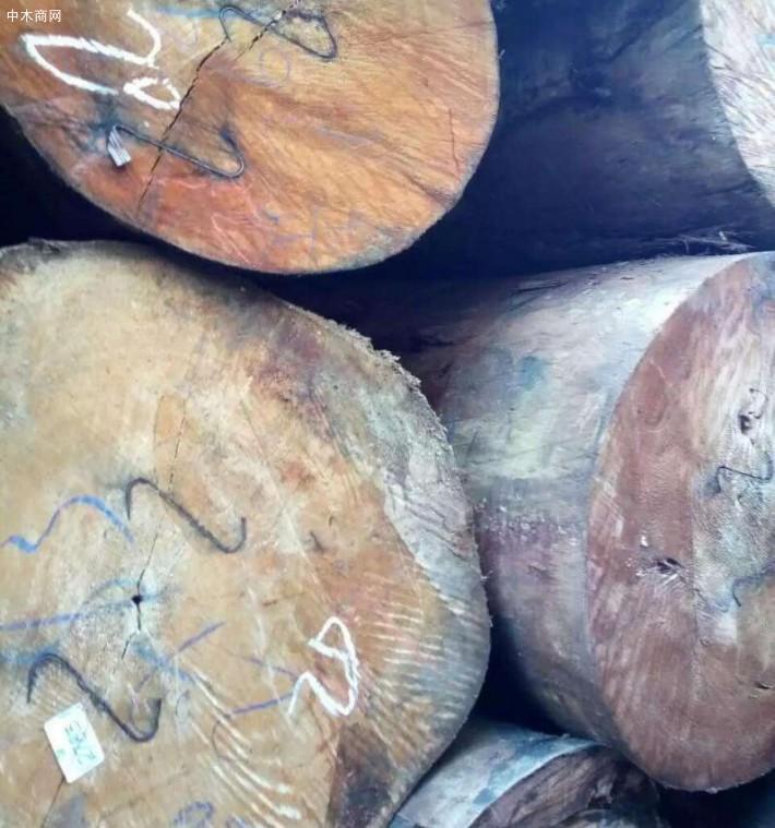求购:漆木和黄杨木原木