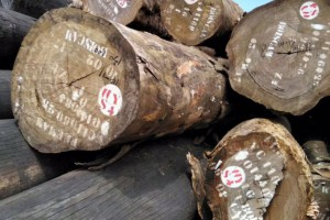 西非花梨木原木原产地直销