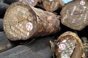 出售进口红斑马原木厂家