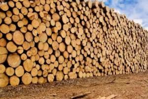 2019年中国进口热带原木木材919万立方米