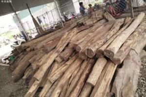 广西真源木业红酸枝,黑酸枝,花梨木原木大方高清图片