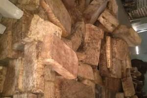泸水天泽易风水文化缅甸黄金樟大板茶几料高清图片