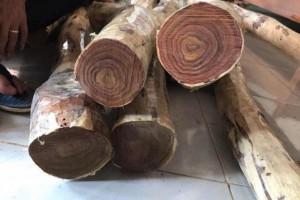 因新冠肺炎疫情越南木材和木材产品加工商调整生产结构