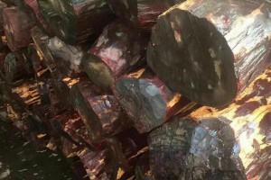 赞比亚血檀原木,染料紫檀原木,坦桑尼亚血檀原木厂家批发价格