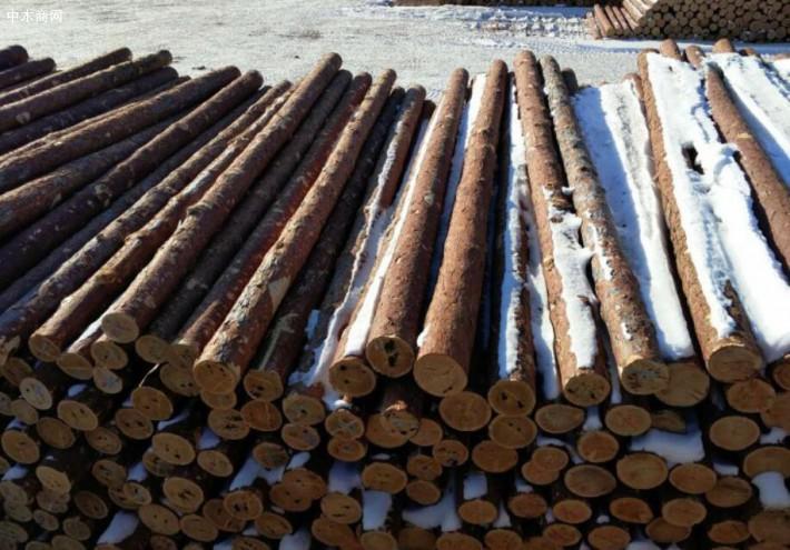 求购:8米落叶松12~14的原木,500方,