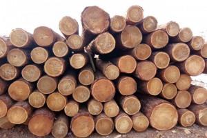 绥芬河口岸俄罗斯落叶松,樟子松原木价格多少钱一立方米_2020年4月2日