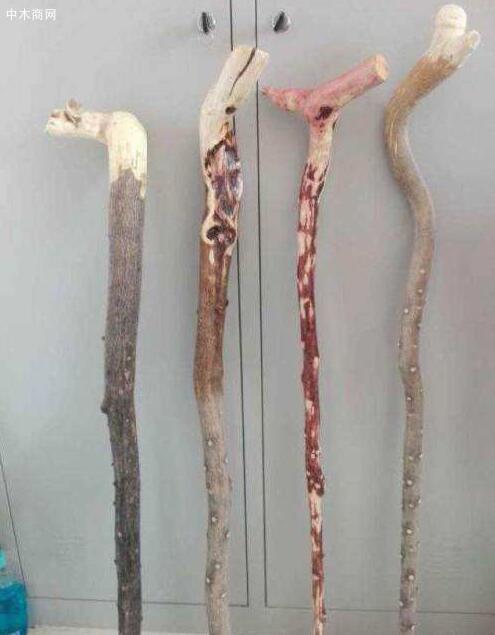 农村的枣树很硬,为啥有的老人说枣木不能做拐棍,那啥木头做拐棍比较好呢厂家