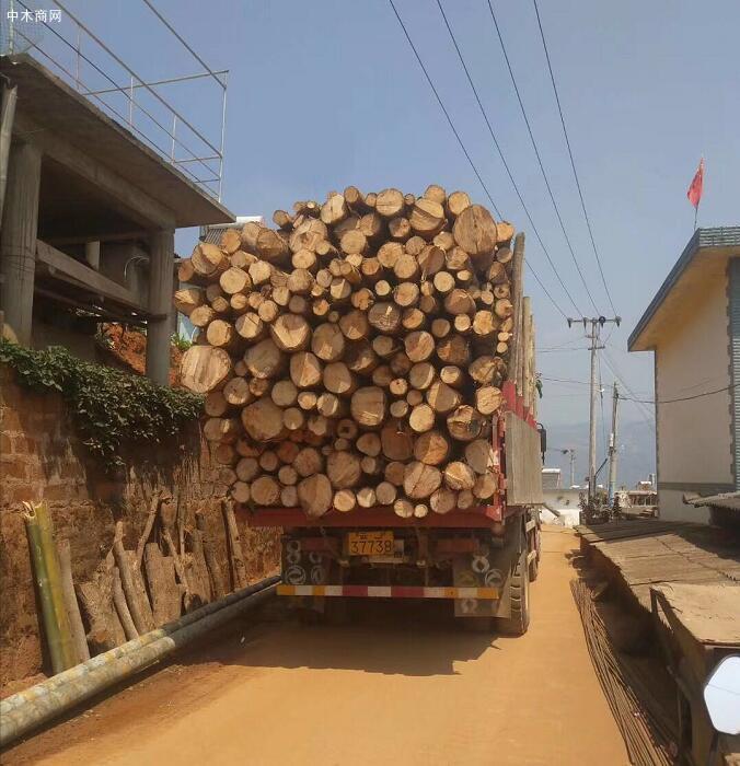 云南西南桦木原木原产地直销,价格便宜价格