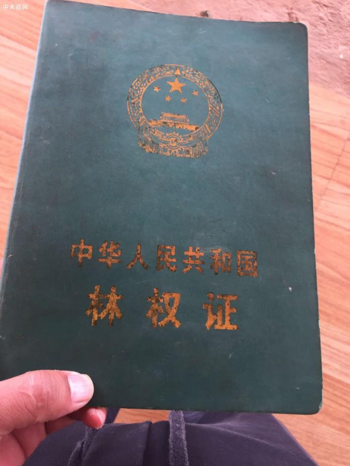 云南杂木原木原产地直销,价格便宜厂家