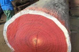 红花梨原木厂家直销