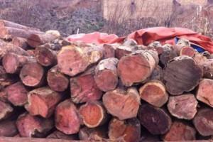 红豆杉原木批发价格