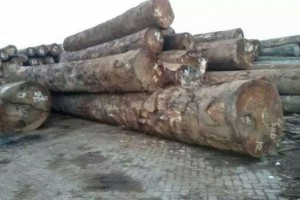 漆木原木厂家批发价格