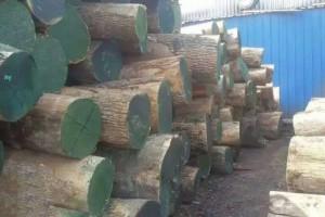 美国白蜡木原木厂家批发价格