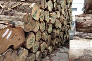 张家港李氏木业进口柏木原木高清图片
