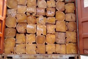 大量出口塞拉利昂刺猬紫檀原木一手红木原材料货源